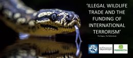 Illegal Wildlife Trade and the Funding of International Terrorism